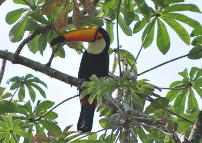 Raizama Birds